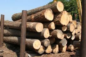 Καύσιμη ξυλεία δρυς