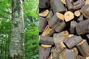 Καύσιμη ξυλεία οξιά