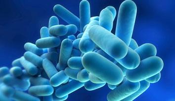 Το βακτηρίδιο της λεγεωνέλλας